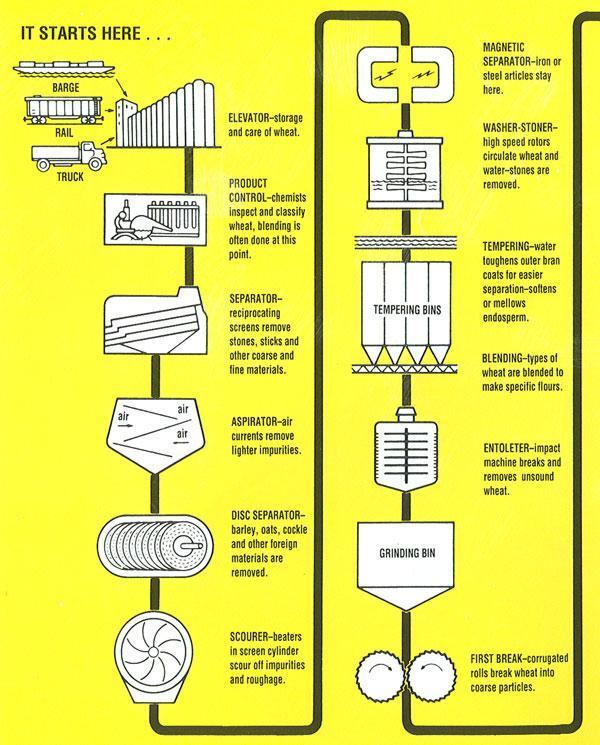 diagram of wheat plant diagram of rice