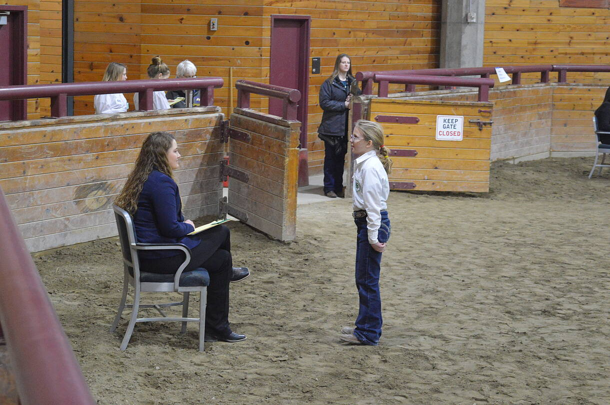 A 4-H'er and judge in the livestock ring