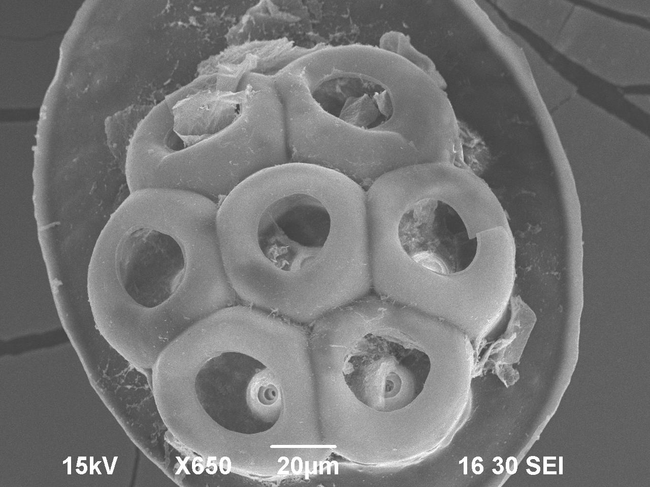 Collaborative For Student Success ~ Lice electron microscopy center ndsu