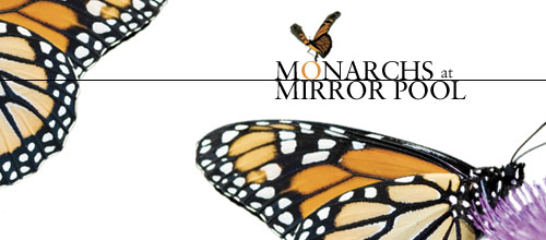 Monarchs at Mirror Pool