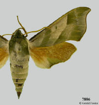 Moths of North Dakota