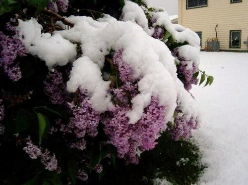 june_winter