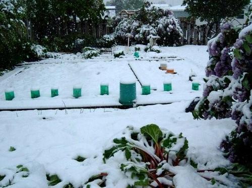 june_winter_2[1]
