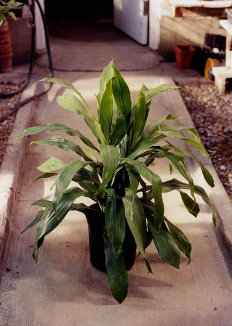 http://www.ndsu.edu/pubweb/chiwonlee/plsc210/plants/janetcraig.jpg