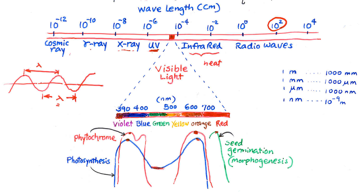 Displaying 18> Images For - Light Spectrum Frequency...