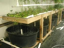 the types and characteristics of the hydroponic technique systems There are a variety of different designs for hydroponic systems popular systems include: nutrient film technique (nft), hydroponic drip systems flood and drain (ebb and flow), water culture.