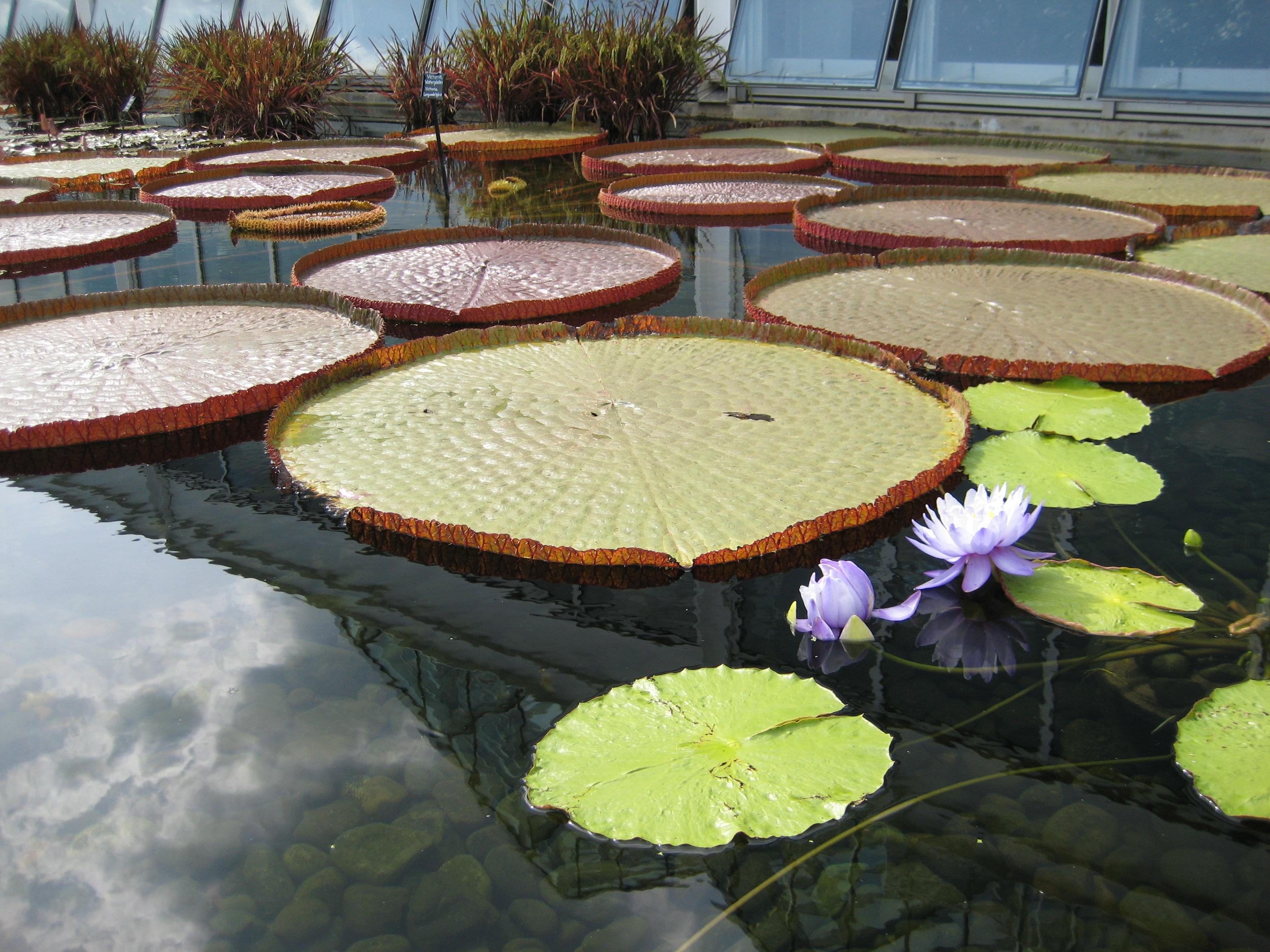 How to create your own water garden for Make your own garden pond