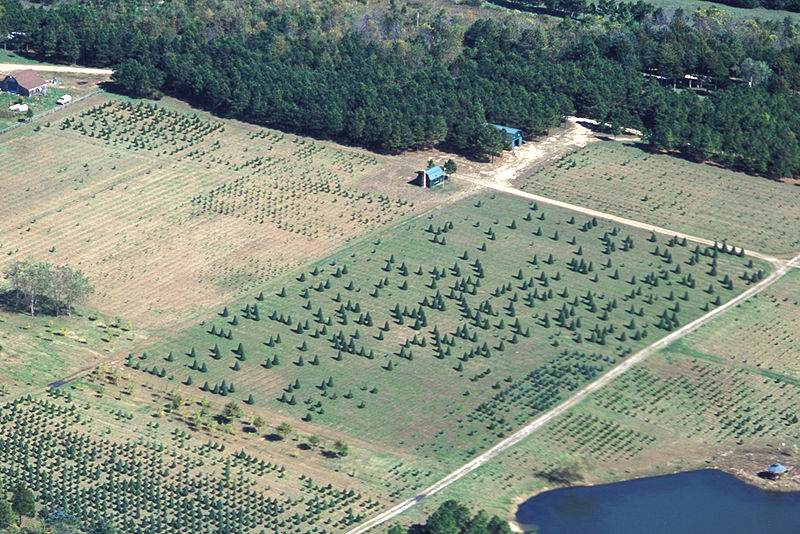 Christmas Tree Producers Part - 48: Christmas Tree Producers Usually Will Have Wholesale Markets In Which  Consumers Can Come To A Tree Farm, That Has The Trees For Sale In Large  Urban Centers.