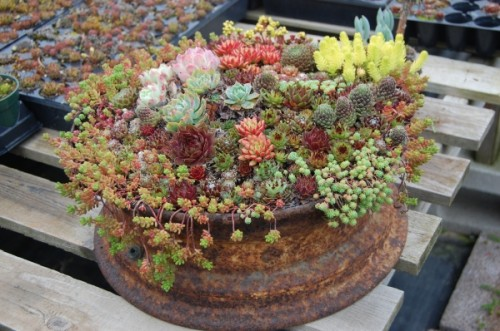 Artwork With Succulents