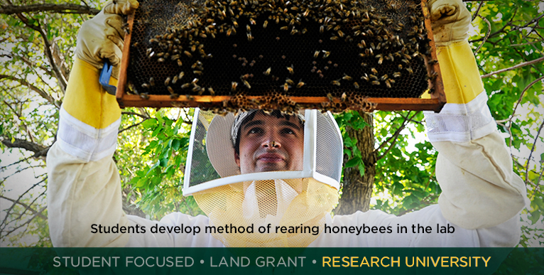 Students develop method of rearing honeybees in the lab