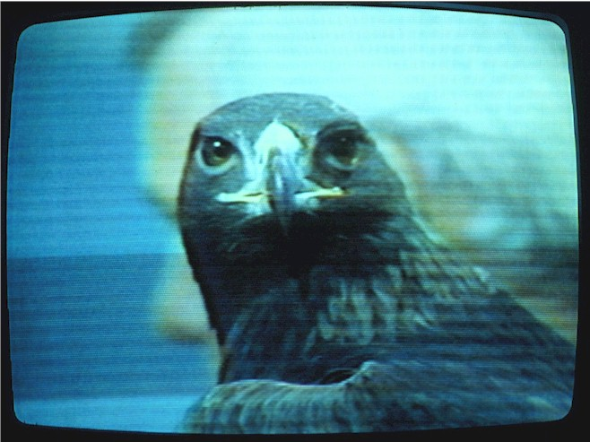 Ithaca-7-head-on-tv.jpg (81004 bytes)