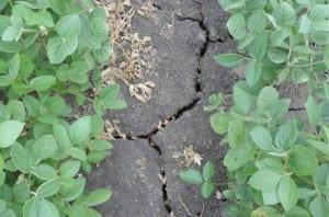 soybeanscrustedsoil