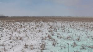 Field 8